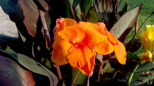 palmis yvavili 7